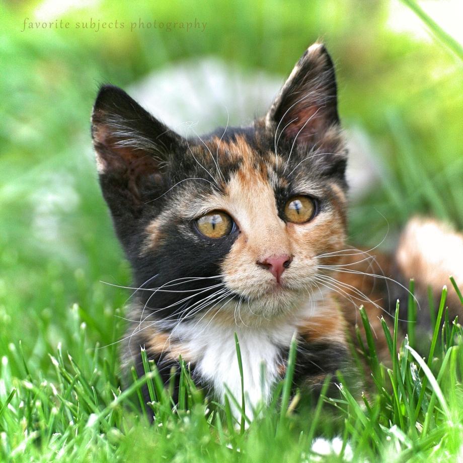CatCallie