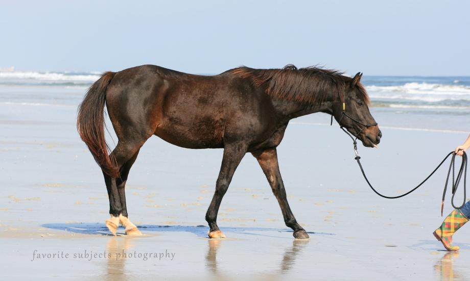 HorseMacaroBoot
