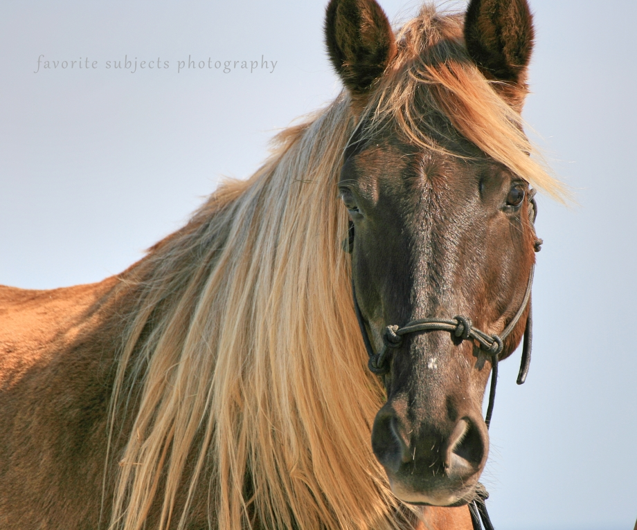 HorseMagicRM