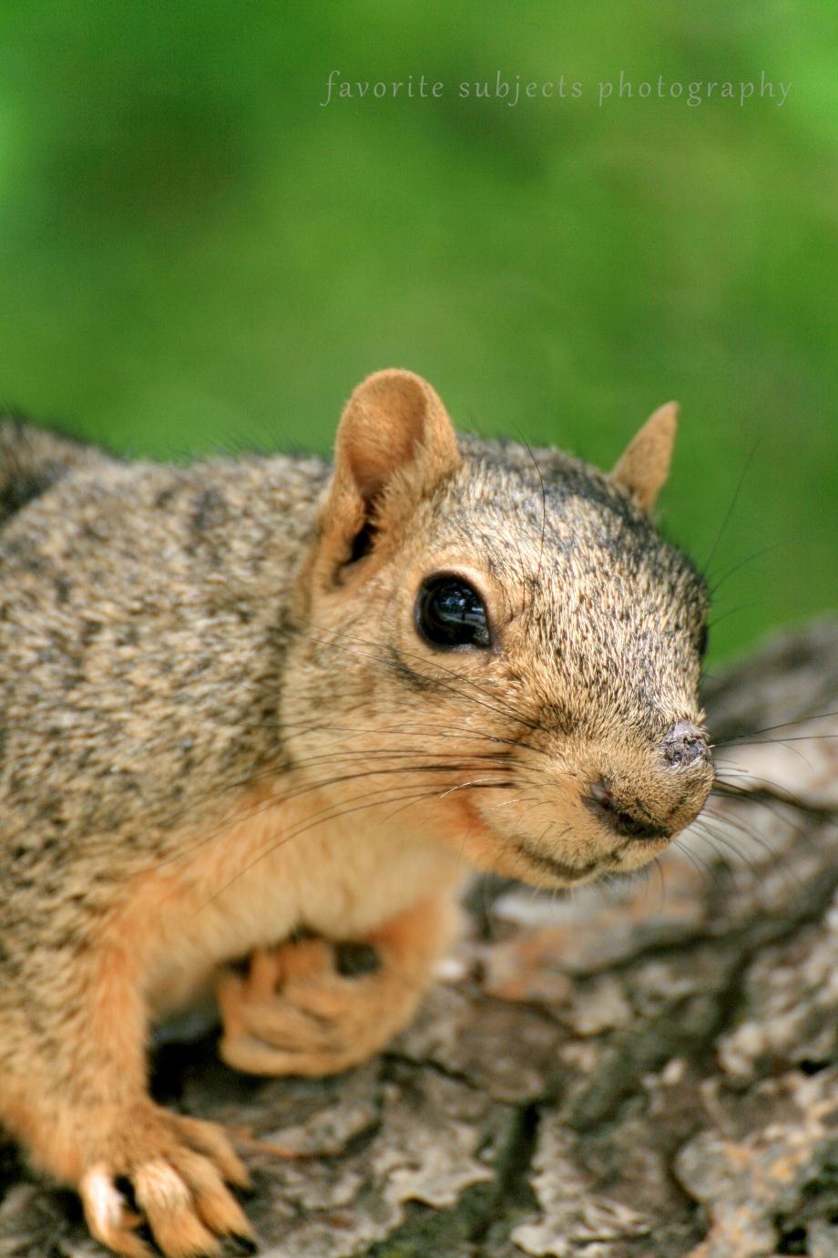 SquirrelFace