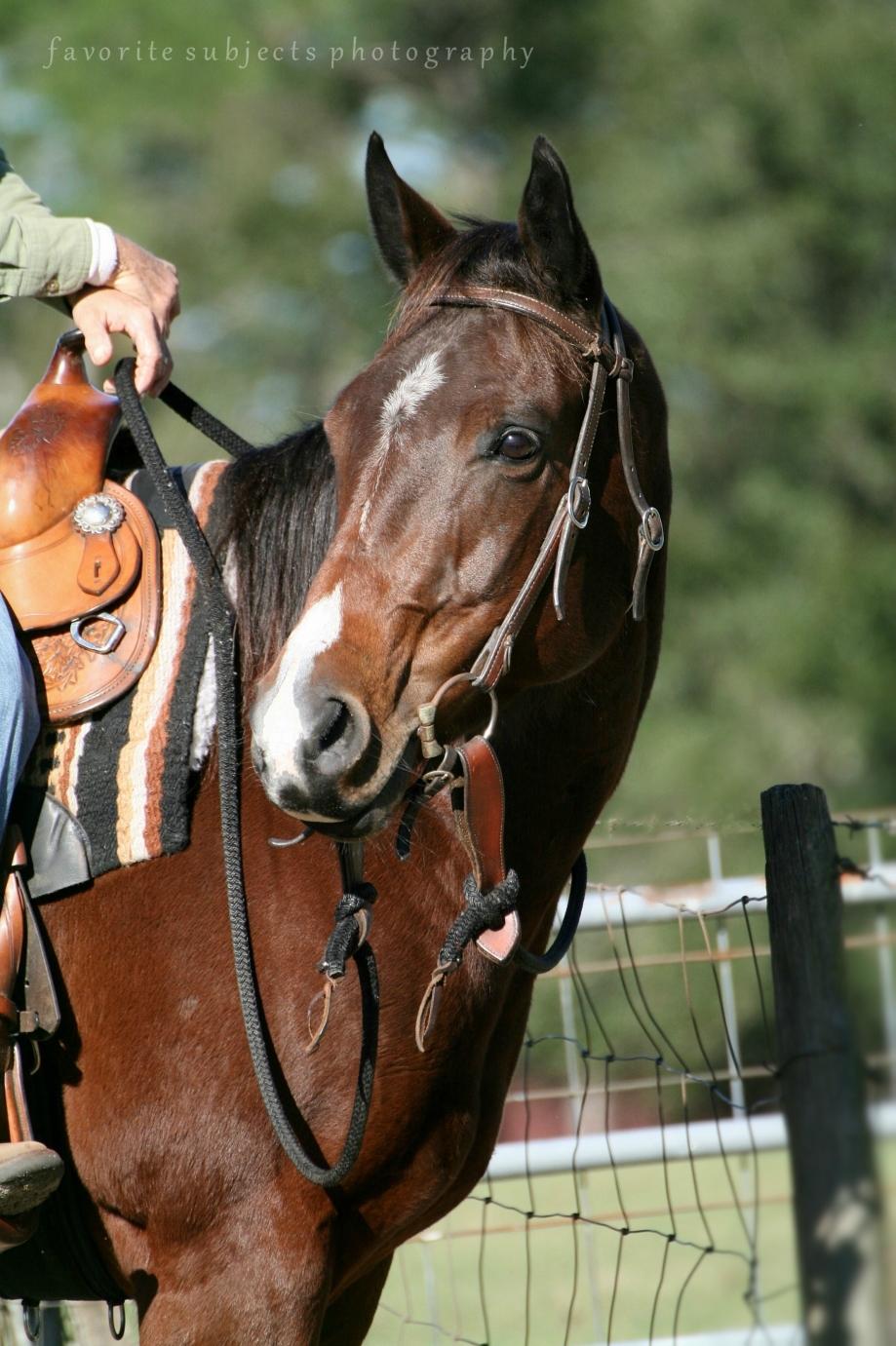 HorseAlexis!