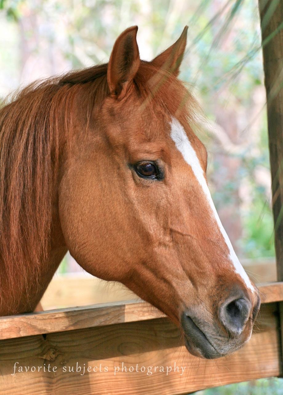 HorseGranite