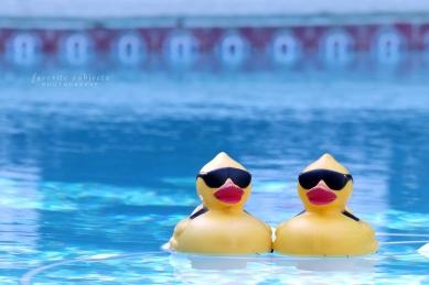PoolPalsTileNW