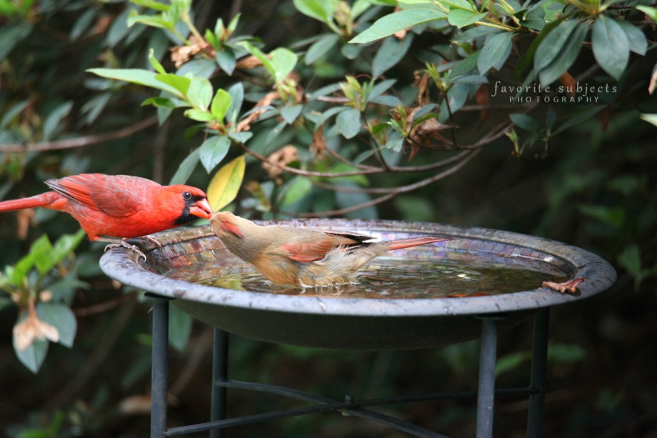 CardinalGivesSnackW